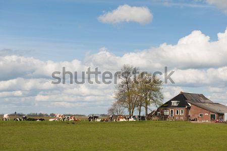 Farmhouse with livestock Stock photo © ivonnewierink