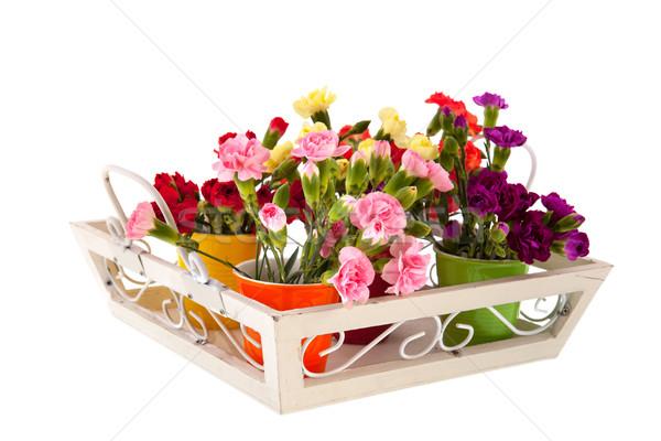 Little Dianthus on white tray Stock photo © ivonnewierink