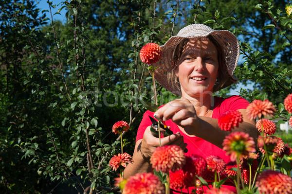 Woman in flower garden Stock photo © ivonnewierink