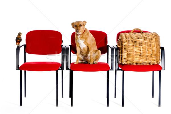 Foto stock: Veterinário · pássaro · cão · gato · médico · médico
