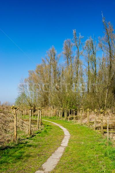 Typisch holland nederlands landschap bomen Nederland Stockfoto © ivonnewierink