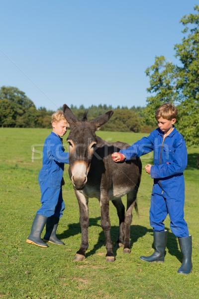 Boy curry the donkey Stock photo © ivonnewierink