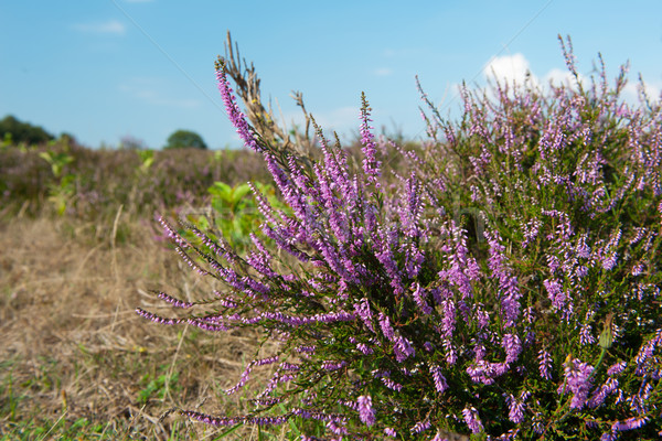 Stockfoto: Landschap · paars · blauwe · hemel · wolken · natuur · horizon