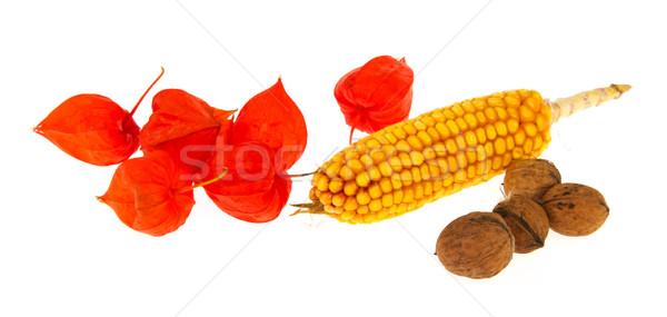 Japanese lanterns maize and walnuts Stock photo © ivonnewierink