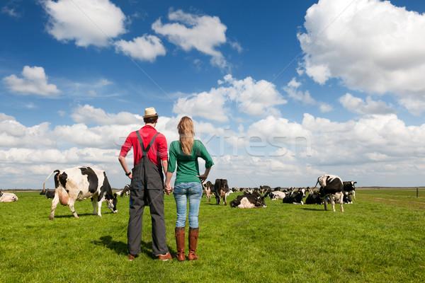 Tipik hollanda manzara çiftçi çift inekler Stok fotoğraf © ivonnewierink