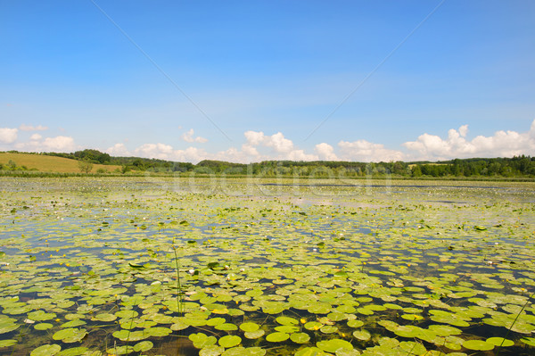 Lake with water lilies and yellow Brandy-bottles Stock photo © ivonnewierink
