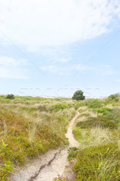 Krajobraz charakter holenderski piasku wyspa ścieżka Zdjęcia stock © ivonnewierink