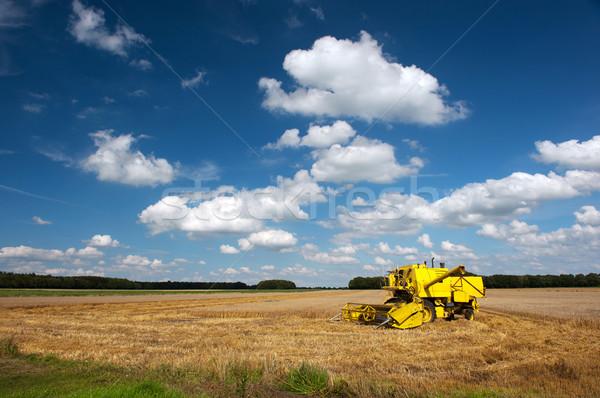 Cosecha grano campos completo verano nubes Foto stock © ivonnewierink