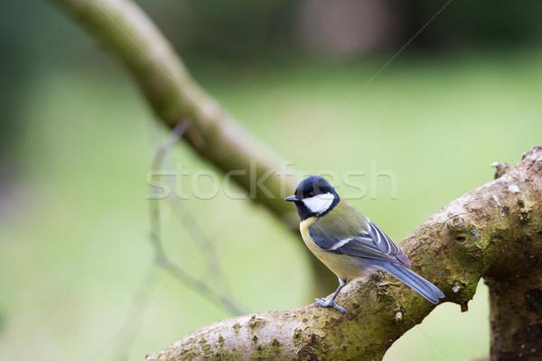 売り言葉 自然 森林 ストックフォト © ivonnewierink