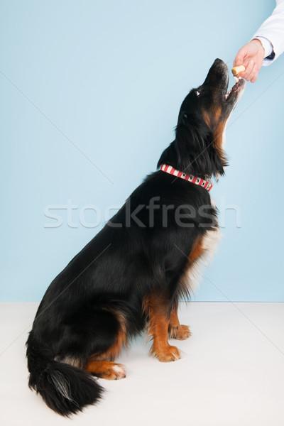 Jutalom állatorvos állatorvos bátor kutya háttér Stock fotó © ivonnewierink