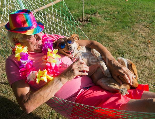 Férfi kutya függőágy napszemüveg alszik díszállat Stock fotó © ivonnewierink