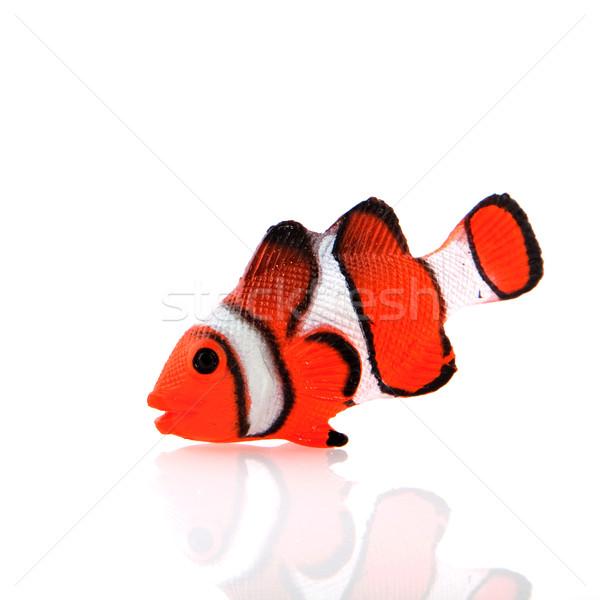 тропические рыбы тропические рыбы оранжевый белый изолированный Сток-фото © ivonnewierink