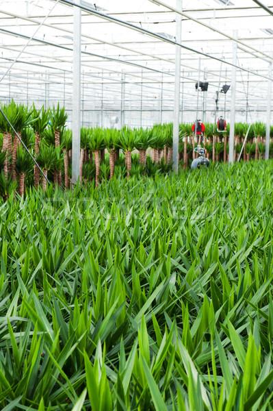 Szklarnia kultury rolnictwa roślin kwiat szkła Zdjęcia stock © ivonnewierink