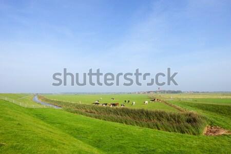 Wide landscape at Dutch wadden island Stock photo © ivonnewierink