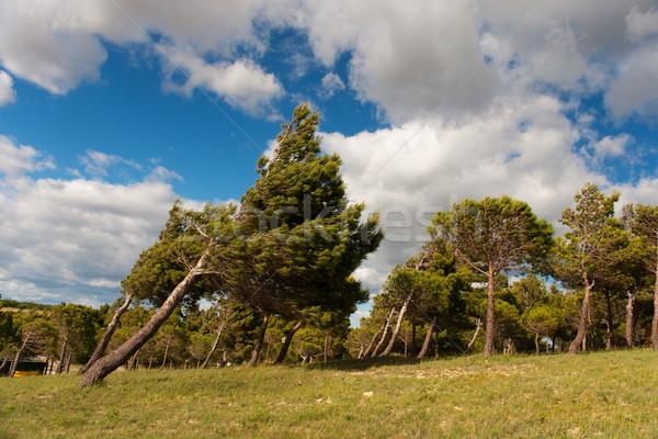 Ventoso tempo árvores natureza paisagem azul Foto stock © ivonnewierink