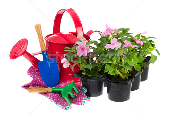 Tray Busy Lizzie plants with gardening equipment Stock photo © ivonnewierink