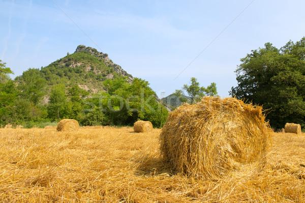 Fieno panorama francese erba estate verde Foto d'archivio © ivonnewierink