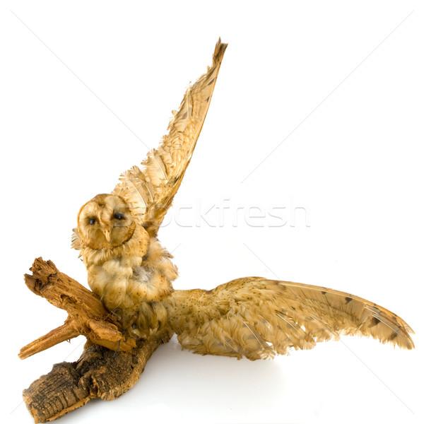 подготовленный совы символ мудрость животного Сток-фото © ivonnewierink