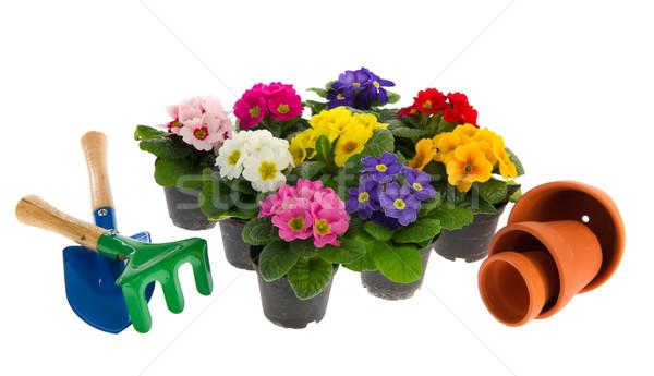 Zdjęcia stock: Kolorowy · wiele · ogród · narzędzia · odizolowany · biały