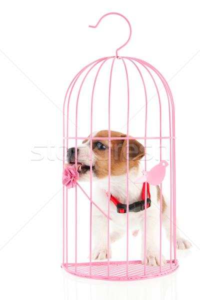 романтические клетке щенков розовый белый животного Сток-фото © ivonnewierink