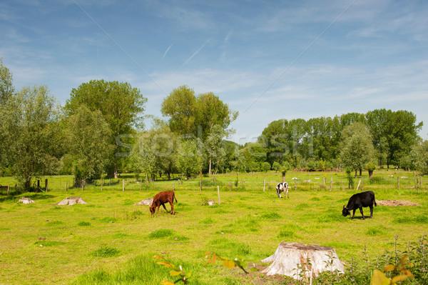 Landscape in Dutch Limburg Stock photo © ivonnewierink