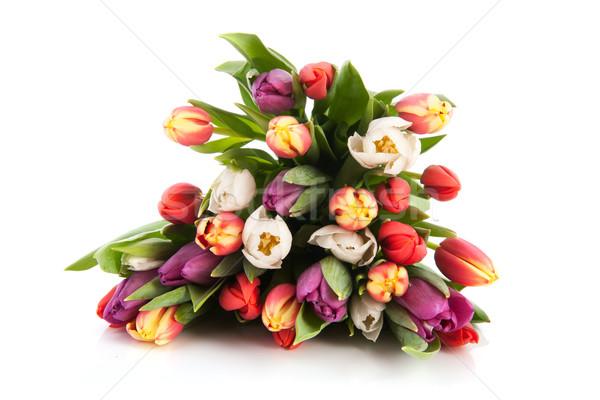 Colorido buquê tulipas belo isolado branco Foto stock © ivonnewierink