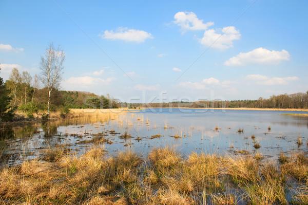 landscape with lake Stock photo © ivonnewierink
