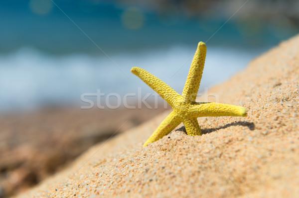 Starfish spiaggia giallo acqua natura sabbia Foto d'archivio © ivonnewierink