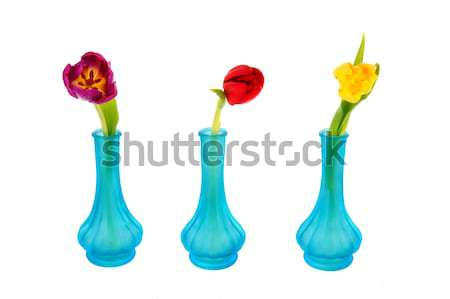 Calla flowers Stock photo © ivonnewierink