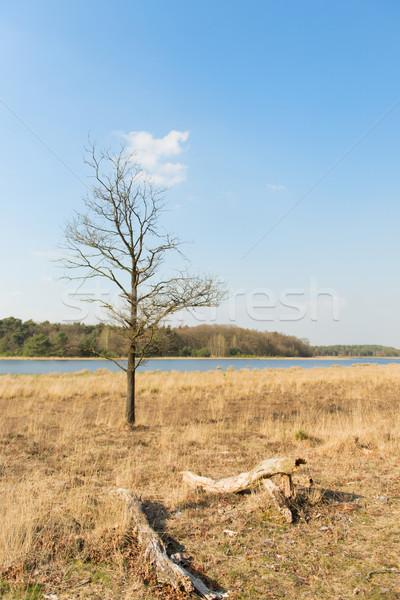 Stock fotó: Tájkép · tó · Hollandia · természet · napsütés
