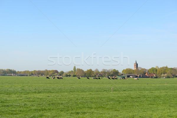 голландский пейзаж небольшой деревне типичный воды Сток-фото © ivonnewierink
