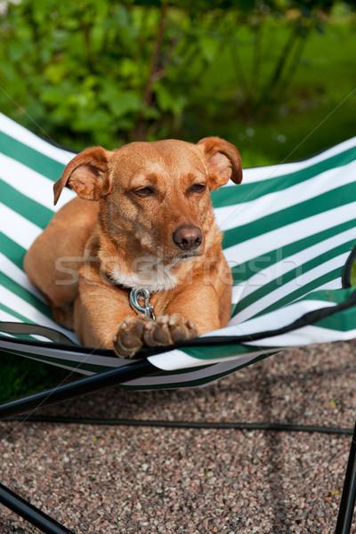 собака коричневая собака зеленый полосатый кровать Сток-фото © ivonnewierink