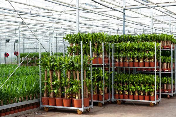 Sera kültür tarım bitkiler çiçek cam Stok fotoğraf © ivonnewierink