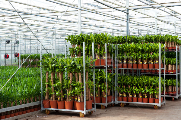 Estufa cultura agricultura plantas flor vidro Foto stock © ivonnewierink