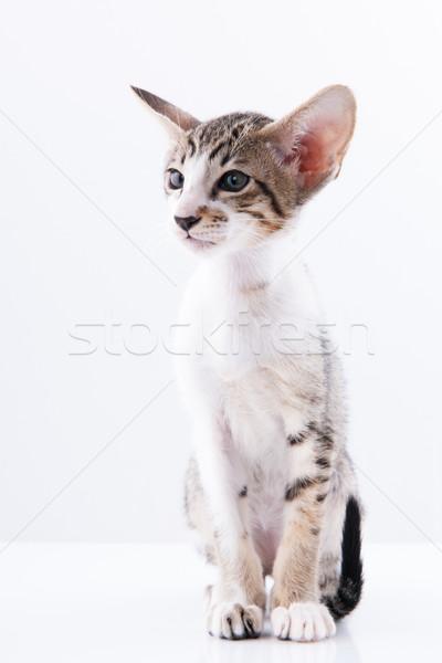 Kedi yavrusu piknik sepeti küçük kırmızı kedi beyaz Stok fotoğraf © ivonnewierink