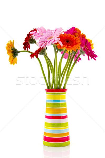 Gerber flowers in striped vase Stock photo © ivonnewierink