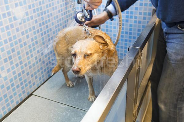 ストックフォト: 洗濯 · 犬 · 男 · 洗浄 · クリーン