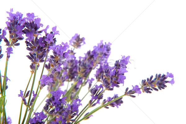 Lavender in pink paper bag Stock photo © ivonnewierink