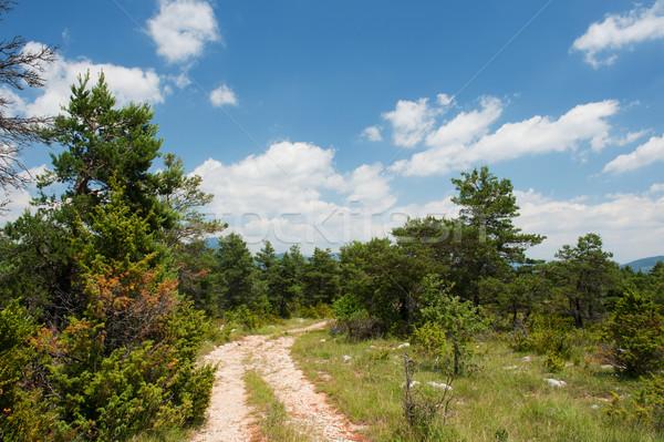 Path in nature Stock photo © ivonnewierink