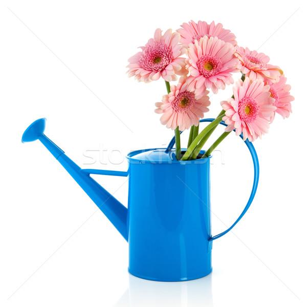 青 じょうろ ピンク 花 孤立した 白 ストックフォト © ivonnewierink