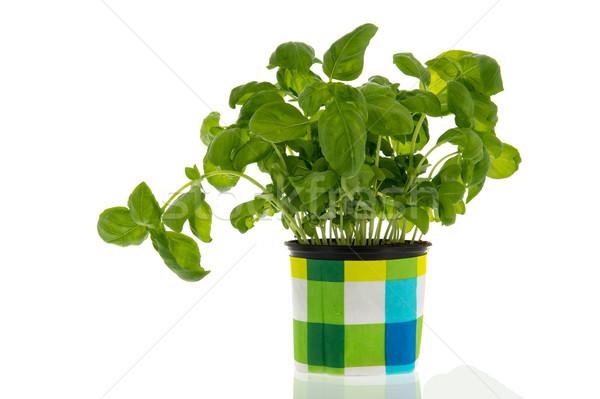 Manjericão planta base colorido comida Foto stock © ivonnewierink