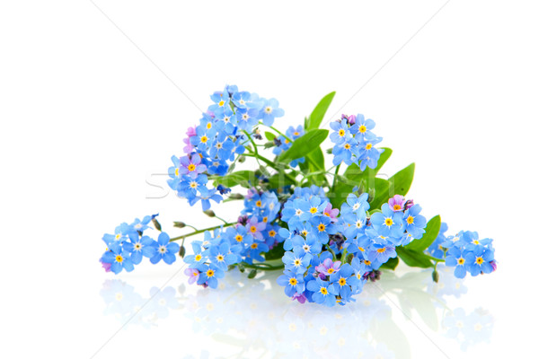 Me nicht blau Blumen Natur Stock foto © ivonnewierink