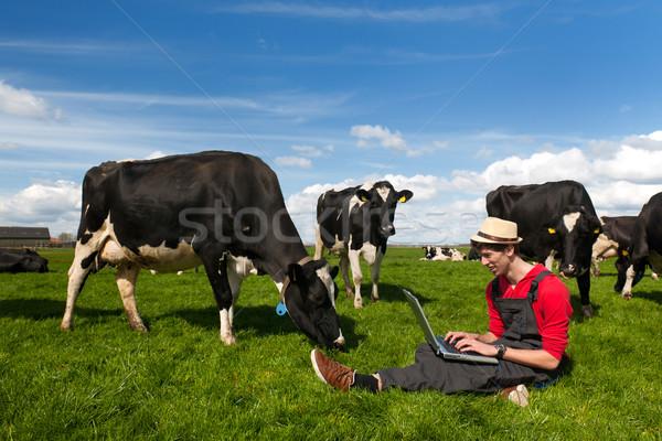 Foto d'archivio: Giovani · agricoltore · laptop · campo · vacche · lavoro