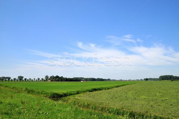 Landscape with farmland Stock photo © ivonnewierink