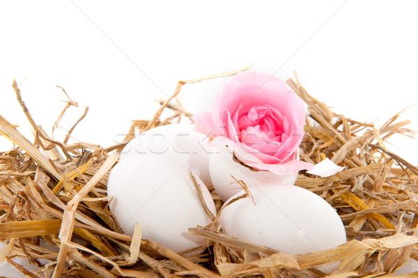 鳥の巣 わら 白 卵 孤立した バラ ストックフォト © ivonnewierink