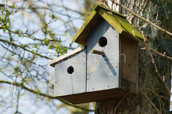 Double birdhouse Stock photo © ivonnewierink