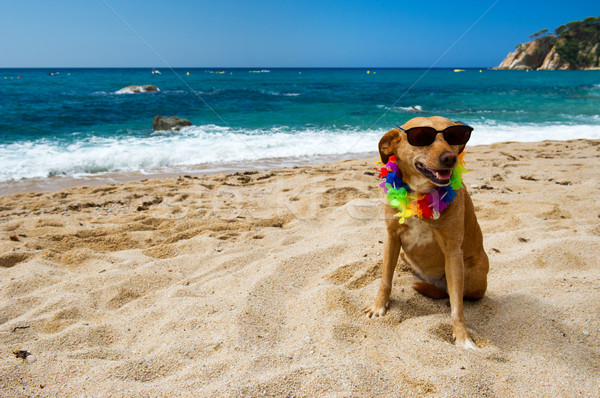 Relaxing Dog At The Beach Stock Photo Ivonne Wierink