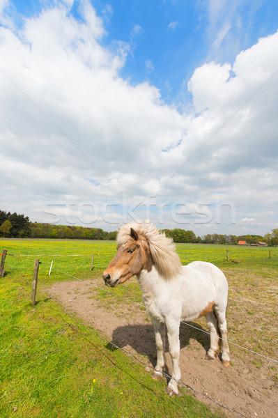 Fehér ló mezők mezőgazdaság áll fű ló Stock fotó © ivonnewierink