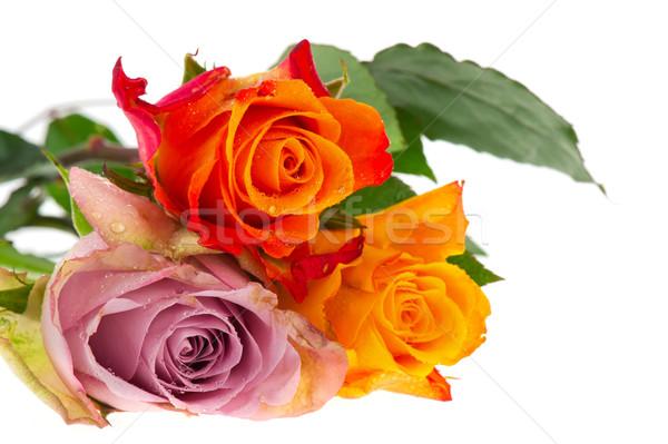 Сток-фото: букет · роз · различный · цветами · красочный · изолированный