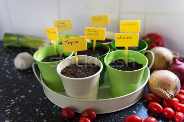 Zaaien kruiden keuken home zomer groene Stockfoto © ivonnewierink